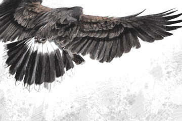 low-flying eagle illustration over artistic background, made wit
