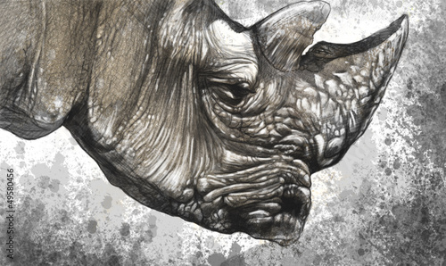 White rhino (Ceratotherium simum) illustration made with digital
