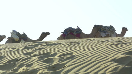 Camel caravan stopped to rest.