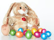 Stuffed Easter bunny and many Easter eggs on white background