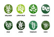 herbs vector button