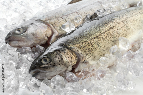 Fresh trout on ice