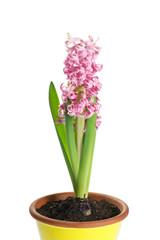 giacinto fiorito