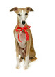 Sitzender Hund mit roter Schleife