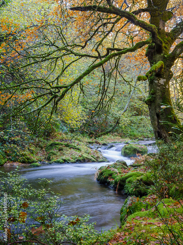 The river crosses the reserve Muniellos in Asturias