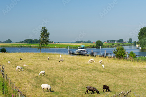 Dutch landscape with water boats and sheep