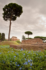 Domus Augustana baths ruins and tree in palatine hill at Rome