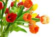 Herrlich bunter Tulpenstrauß