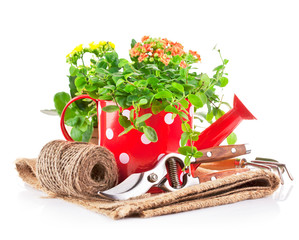 green plant in red watering can with garden tool isolated on
