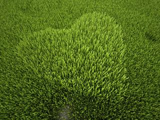 cuore d'erba