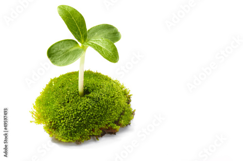 Young sprout with moss