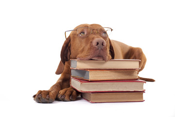 dog laying head on a pile of books
