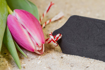 Tulpe auf Sand mit Schild zum Beschriften