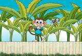 A monkey and a bee near the banana plants