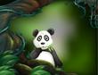 A panda at the jungle