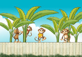 A group of monkeys at the fence
