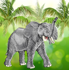 elephant with raised trunk & green background