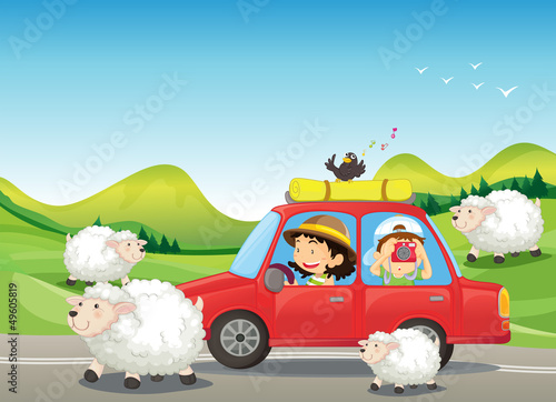 The red car and the sheeps at the road