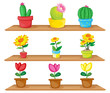 Wooden shelves with ornamental plants
