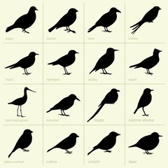 Set of birds (part 1)