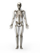 3d rendered illustration - skeleton