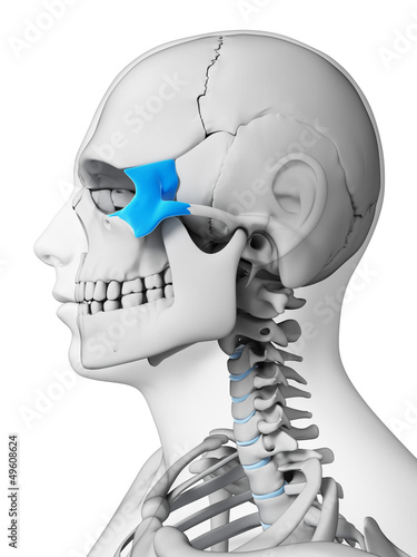 3d rendered illustration - zygomatic bone