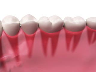 3d rendered illustration - lower teeth