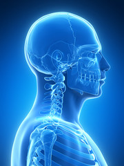 3d rendered illustration - skeletal neck