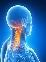 3d rendered illustration - skeletal neck
