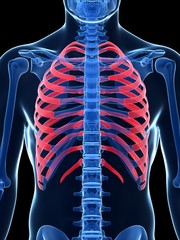 3d rendered illustration - ribcage