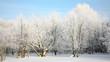 Russian winter on blue sky in sunlight
