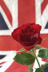 English Rose with Union Jack, soft focus