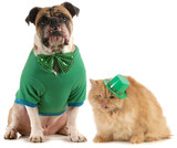 st patricks day dog and cat
