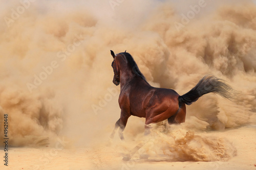 Arabian horse running out of the Desert Storm