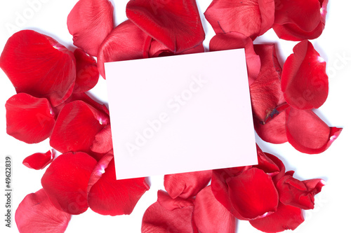 Red rose greeting card.