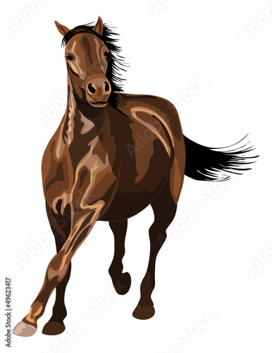 horse galloping in sunshine. A lot of glossy reflections.