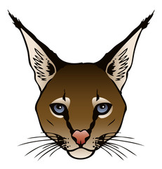 Caracal Illustration