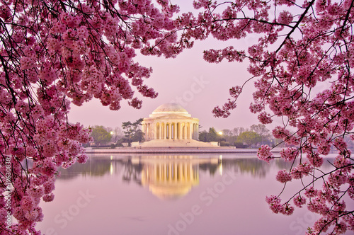Foto Spatwand Historisch mon. Sunrise with cherry blossoms at Jefferson Memorial.