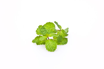 mint on white paper