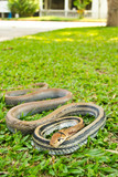 Snakes, venomous reptiles poster