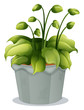 A green plant in a gray pot