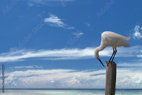White egret heron on the blue sky background