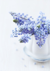 Grape Hyacinths in a Cup