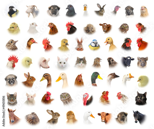 Papiers peints Chouette animals and birds