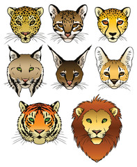 Big Cat Illustrations Collection