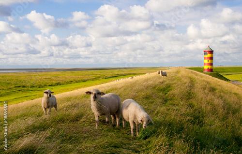 Schafe am Pilsumer Leuchtturm - Nordsee