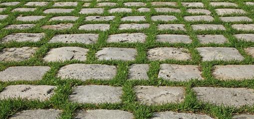 herbe entre pavés