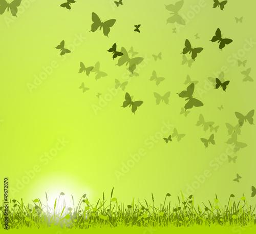Wiese Sonne Schmetterlinge grün