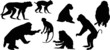 eight isolated monkey silhouettes