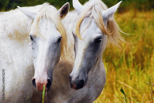 Fototapeten,tier,pferd,wild,natur